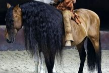 Cavalia- Must see show for horse lovers! / by Dave Armishaw