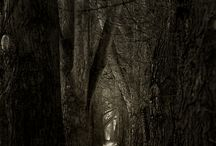 Haunted / by Jennifer Thermes