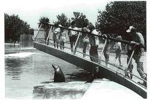 Tulsa Zoo Celebrates 85 Years / by Tulsa Zoo