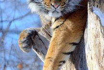 Lions and tigers and bears (oh my!) / by Sharon Colomb