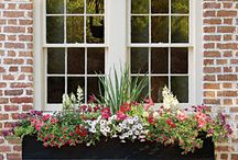 GARDENING... Window Boxes / Produce  window boxes full of beautiful flowers for your home. Display a collection of flowers, buds, blooms, and foliage in a variation of sizes, and textures. / by Estelle Lynch