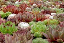 Crazy for Succulents / by Garden Design