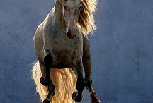 Horses and Tack / by Hannah Nast
