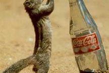 Soda / by Daniel Holmes