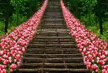 Japan / by Kathy Dietkus