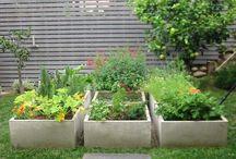 Garden / by Teri Brentnall