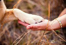 Dog Photography / by Lucy Bartholomew