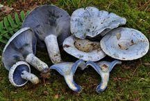 Fungi / by Shawn Newman