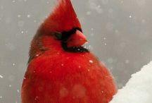 Birds / by Ashley LeClair