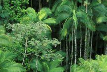 Palm trees <3 / by Tammi Cisler