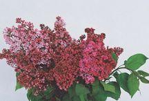 Floral / by Rose Liu