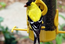Birding / by Hawthorn Gardens
