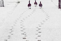 SNOW / by Patoirlove