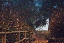autumn / by R.A.Q