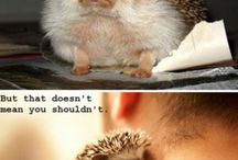 My Hedgehogs / by Ivy Carruth