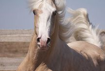 ♥ Horses / Love Them All! Beautiful Majestic Creatures! / by Lisa Barajas
