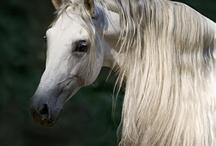 Horse crazy / by Stacey Van Berkel