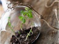 Organic Veggie Garden and Herbs / by Shennandoah Diaz