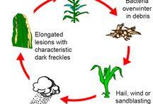 Crop Diseases / by Brian Scott