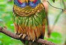 birds / by Judy Foster