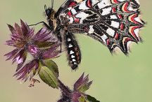 BEAUTIFUL BUTTERFLIES & MOTHS / So many brilliant colors and designs.  They are GORGEOUS! / by Shelley Drnek