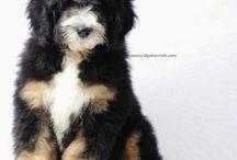Cute!  / by Carli Pennypacker