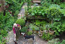 gardening / by Carol Albright