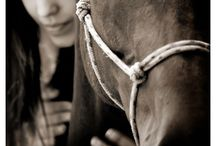 horses / by Kelcie Price