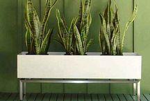 Plantae / House plants, air plants and succulents. / by Paradis