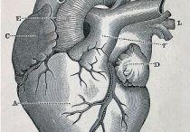 anatomical / by Lydia Johnson
