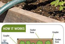 Gardening, Outdoors Ideas Tips & Tricks / by Alicia Calhoun-Mackes