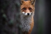 Animal Cuteness / by Angie Buffington