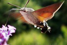 Butterflies and moths! / by LouAnn Bunch