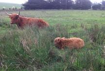 Cute Farm Animals / by Farmstead at Long Meadow Ranch