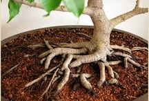 Grow, Seeds, GROW! / by Indigo Rose