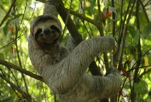 Pura Vida -- Costa Rica! / Lush rainforests and pristine beaches; tiny blue frogs and giant leatherback turtles; screaming howler monkeys and crashing white waves -- much love to Costa Rica! #travel / by Adventure Life