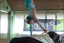 horse,  vaulting / by Sheri Evert