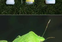 Bug spray / by Teresa Doman Flaherty