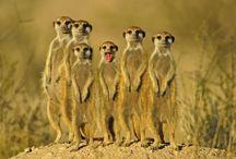 animal planett!!! / by Nakshi Vyas
