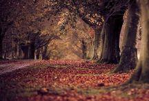 fall is my favorite / by Kristen C