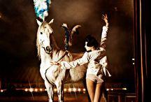 Circus dreaming / by Gillian Marshall