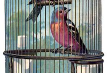 Bird Images / by Patricia Panzica