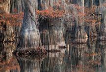 Louisiana / by Jen Millard