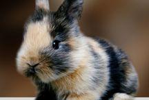Pet Ideas / by Laura Partin