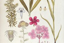 Botanical Illustration / by Ula Lala