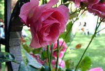 Front Yard Garden Inspiration / by Kira Johnston