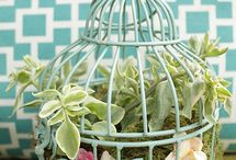Plants, Flowers & Landscape ideas / by Vanessa Hansen-Mills