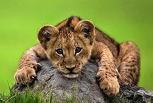 Amazing Animals / by Cynthia Rowland