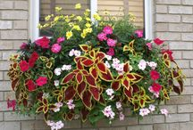 Window boxes and containers / by Peggy Cameron
