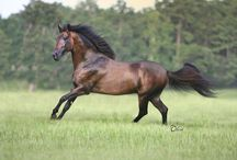Equine Excellence / Getting in touch with my inner horsewoman. / by Patricia Turner
